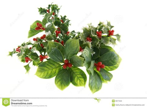 holiday greenery stock images image 6977534