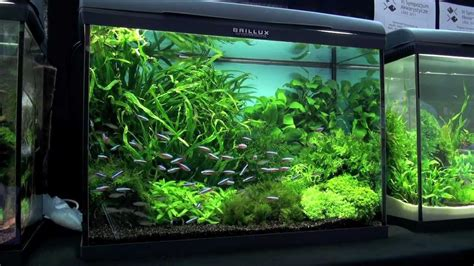 aquascaping ideas aquascaping aquarium ideas from petfair 2011 part 3