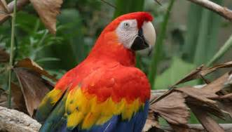 Rainforest Animals In The Canopy by Animals Of The Canopy Sciencing