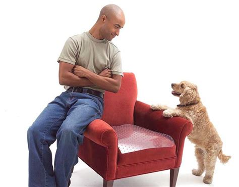 how to remove pet odor from couch how to remove odor from couch 301 moved permanently how
