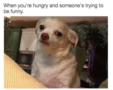 Funny Food Names Meme - best 25 food meme ideas on pinterest funny food memes