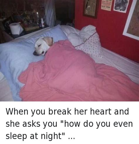 Dog In Bed Meme - 25 best memes about animals bae and dogs animals bae