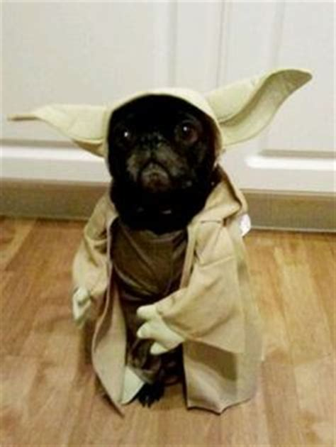 pug yoda costume for sale 1000 images about clothes on costumes costumes and pet