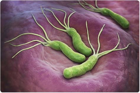 helicobacter pylori test helicobacter pylori tests