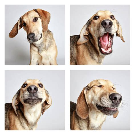 designboom dogs humane society of utah snapshots adoptable dogs in a photo