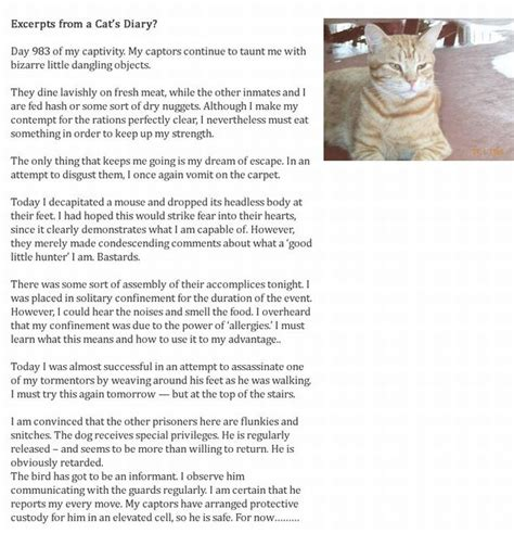 cat diary vs diary s diary vs cat s diary 2 pics