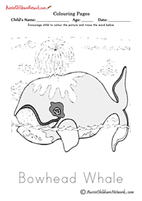 bowhead whale coloring page polar animals colouring pages aussie childcare network
