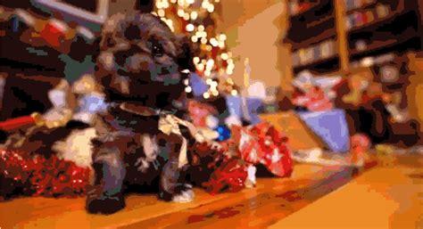 christmas animal gifs find share  giphy