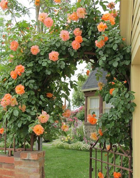 Rosenbogen Garten by Rosenbogen Bepflanzen Und Prachvollen Hingucker Im Garten Gestalten