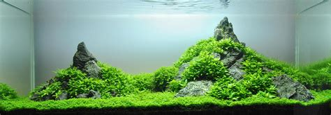 Mountain Aquascape by Lennart J 246 Hnk And Aquascaping Aqua Rebell