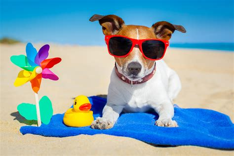 sunscreen for dogs sunscreen could save your s mybusydog