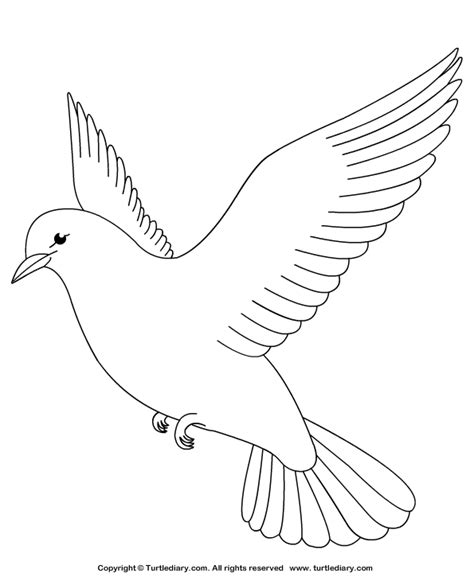 Coloring Pages Dove Bird | dove coloring sheet turtle diary