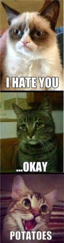 Cheer Up Cat Meme - depressed cat meme gallery 16 photos thechive