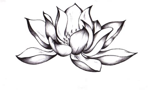 tattoo flash lotus tattoo flash lotus clipart best