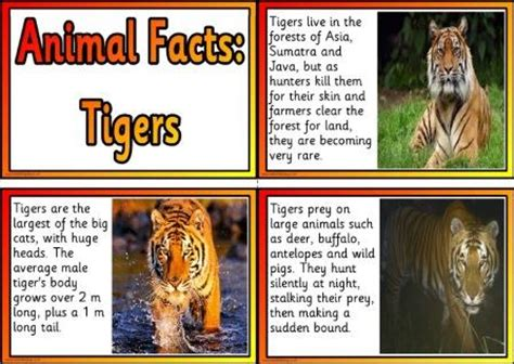printable animal fun facts free printable animal facts posters tigers educational