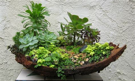 Turtle Succulent Planter by Miniature Gardens My Succulents And Designs