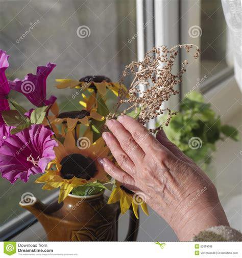 fiori da davanzale fiori su un davanzale della finestra fotografia stock
