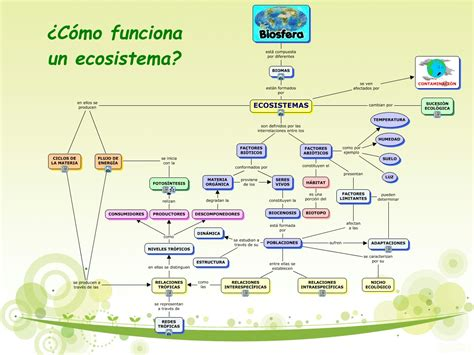 clasificacion de las cadenas musculares pdf c 243 mo funciona un ecosistema 1