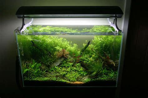 aquascape zonder co2 omgekeerde co2 methode geen algen tijdens de opstart