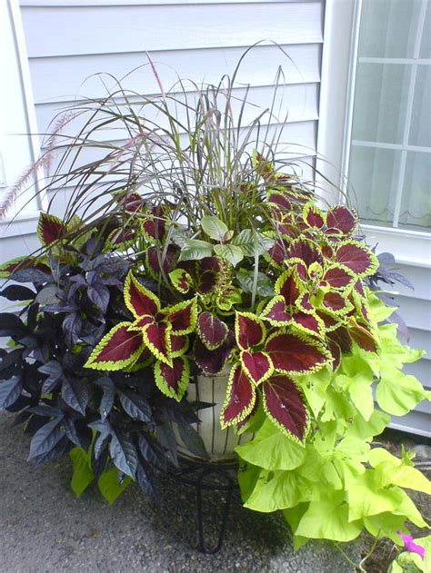 mixed foliage container tips  color combinations