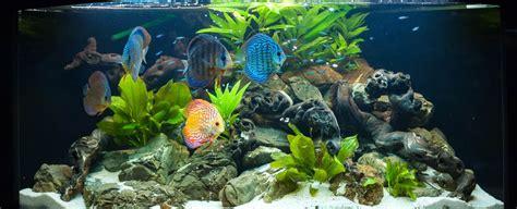 welche beleuchtung aquarium akwarium fische pin aquarium fische on