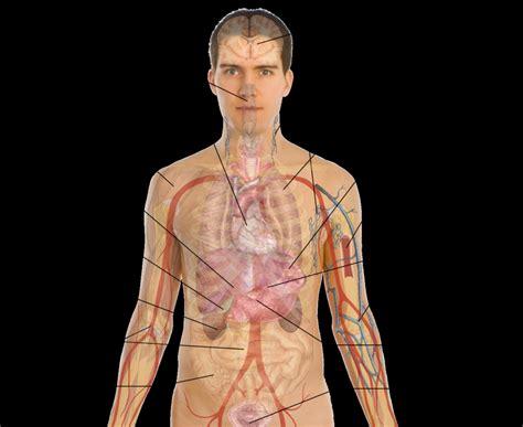 human anatomy diagram organs diagram human human anatomy diagram