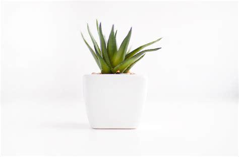 minimalist plants free stock photo of minimalism minimalist plant