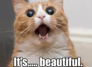 Cat Pic Meme - digikitty