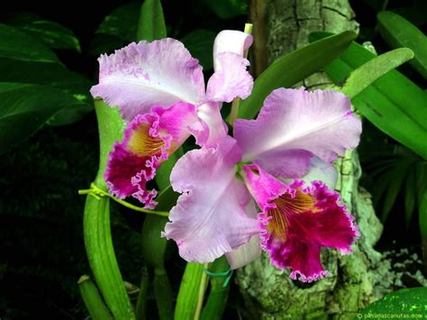 google imagenes orquideas 1000 images about orqu 237 deas ii on pinterest orchid