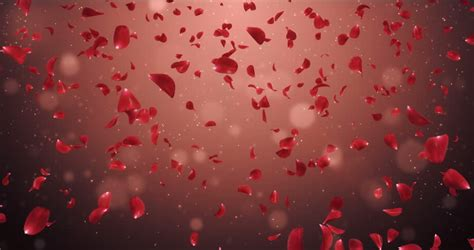 Wedding Backdrop Animation by Animation Of Flying Flower Petals
