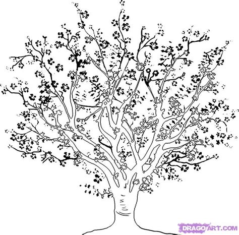 detailed tree coloring page how to draw a cherry tree step by step trees pop