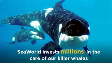 Orcas In Captivity Essay by Whales In Captivity Essay Contest