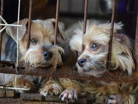 puppy mills in california update california set to ban puppy mill sales to encourage adoption top tips