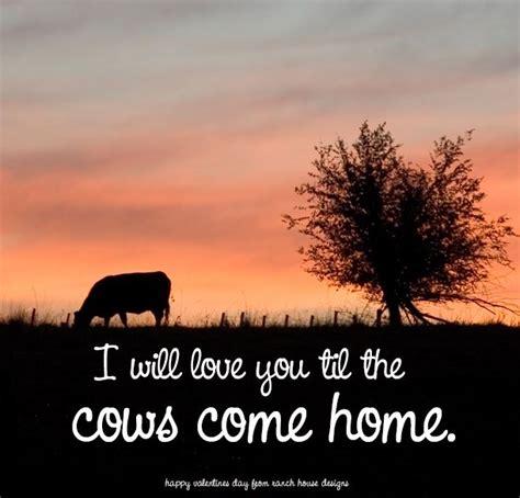 cow quotes quotesgram