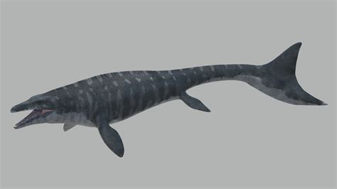 Free Accurate Search Mosasaurus Hoffmanni Historically Accurate 3d Model Animated Rigged Ma Mb Cgtrader