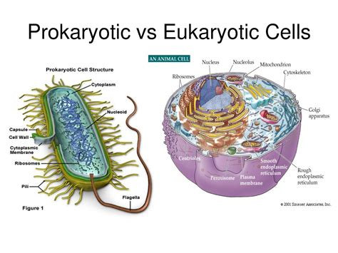 Eukaryotes on the other hand are organisms that consist of membrane