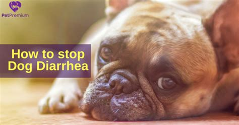 how to stop diarrhea in dogs how to stop diarrhea