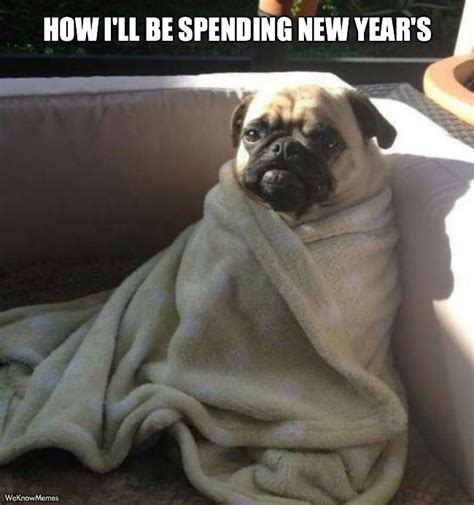 New Dog Meme - how i ll be spending new year s meme weknowmemes