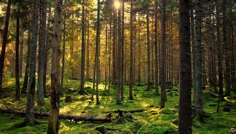 how is biomass calculated sciencing