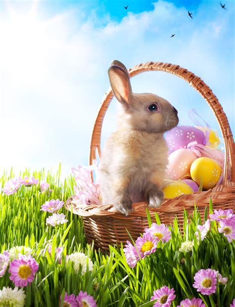easter bunny easter bunny history sandman says