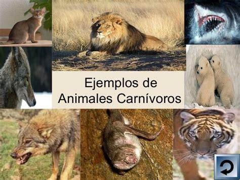 imagenes de animales carnivoros herbivoros y omnivoros powerpoint animales carn 237 voros herb 237 voros y omn 237 voros
