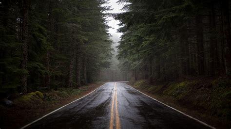 wallpaper  road fog nature trees full