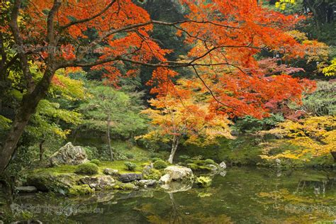 foto giardini giapponesi carta da parati fotomurali paesaggi poster murali