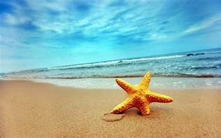 starfish backgrounds wallpaper cave