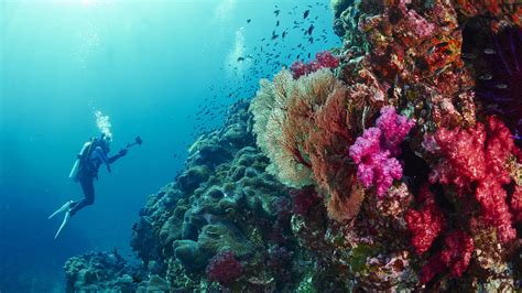 padi dive padi advanced open water diver padi courses in phuket