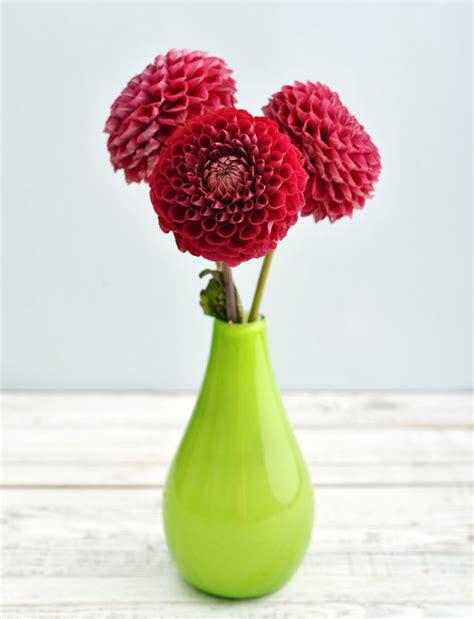 fiori recisi invernali fiori di settembre ecco i pi 249 belli da scegliere per la