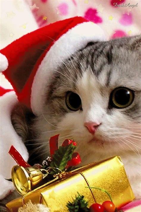 gaticos santa navidad gatos navidad gatos  gatos navidenos