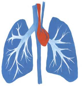 Tom james heart and lungs