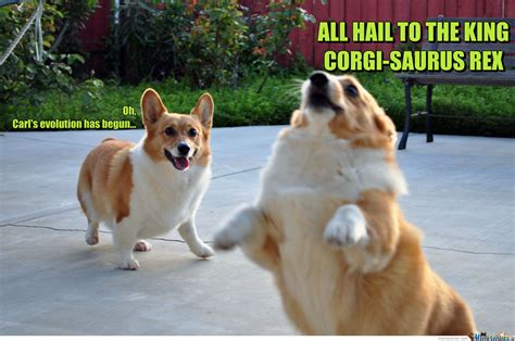 Corgi Puppy Meme - cute funny puppy memes black models picture