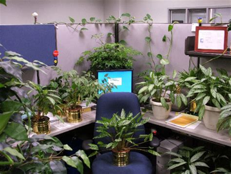 cubicle plants top 10 cubicle pranks toptenz net